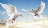 Flying Birds In The Sky Wallpaper