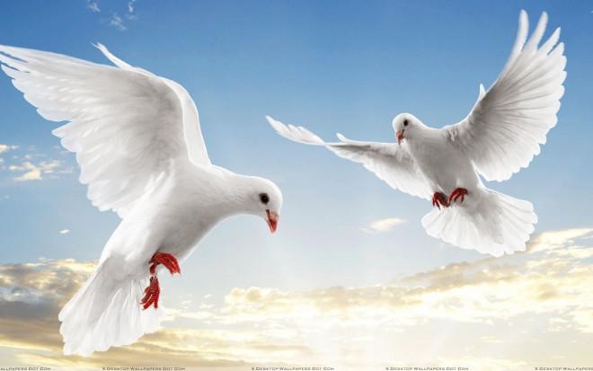Flying Birds In The Sky Wallpaper