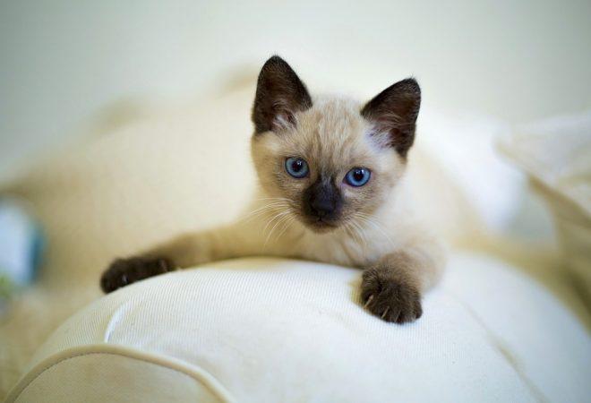 videozapisi o mačkama sićušne porno galerije