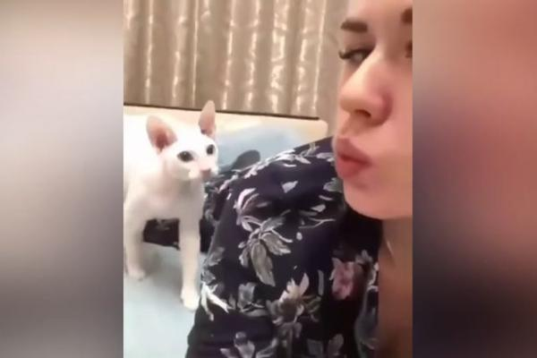 Usne crna maca