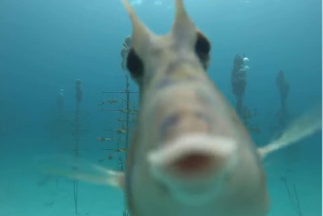 (VIDEO) Preslatka morska krava osvojila srca brojnih korisnika društvenih mreža: 'Vrlo je znatiželjna!'